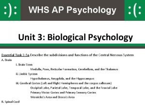 WHS AP Psychology Unit 3 Biological Psychology Essential