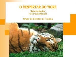 O DESPERTAR DO TIGRE Apresentao Ana Paula Mourato