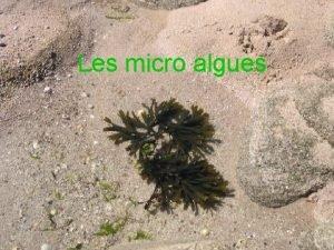 Les micro algues A Prsentation a Dfinition Ensemble