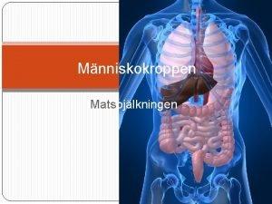 Mnniskokroppen Matspjlkningen Matspjlkningskanalen i korthet Munhla Matstrupe Magtarmkanal