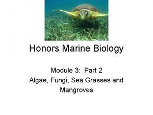 Honors Marine Biology Module 3 Part 2 Algae