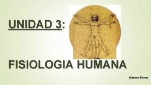 UNIDAD 3 FISIOLOGIA HUMANA Warnes Bruno FISIOLOGA HUMANA