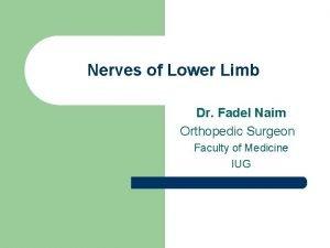 Nerves of Lower Limb Dr Fadel Naim Orthopedic