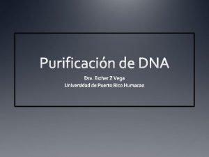 Resumen DNA total DNA de plasmidio DNA de