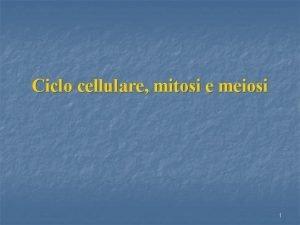 Ciclo cellulare mitosi e meiosi 1 Divisione cellulare