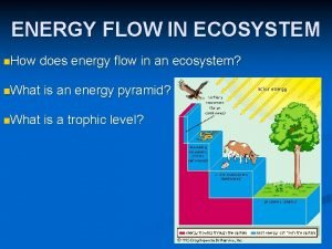 ENERGY FLOW IN ECOSYSTEM n How does energy