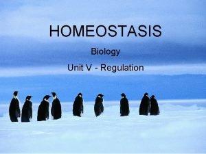 HOMEOSTASIS Biology Unit V Regulation WHAT IS HOMEOSTASIS