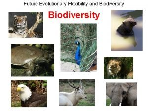 Future Evolutionary Flexibility and Biodiversity Future Evolutionary Flexibility