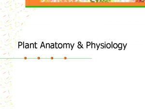 Plant Anatomy Physiology Parts of a Flower Foldable