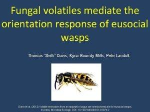 Fungal volatiles mediate the orientation response of eusocial