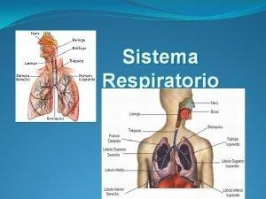 Sistema Respiratorio Sistema Respiratorio La Respiracin Es un