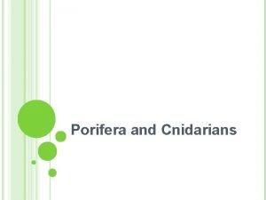 Porifera and Cnidarians PORIFERA SPONGES PORIFERA The Sponges