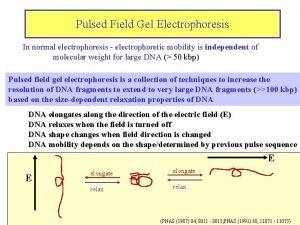 Pulsed Field Gel Electrophoresis In normal electrophoresis electrophoretic