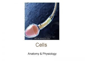 Cells Anatomy Physiology Cells vary in SIZE and