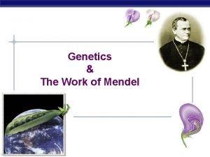 Genetics The Work of Mendel Gregor Mendel Modern