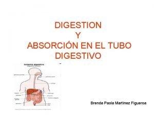 DIGESTION Y ABSORCIN EN EL TUBO DIGESTIVO Brenda