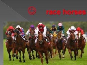 race horses SIR DES CHAMPS Sir des champs
