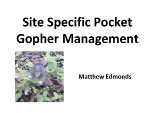 Site Specific Pocket Gopher Management Matthew Edmonds Why