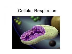 Cellular Respiration Cellular Respiration the release of energy