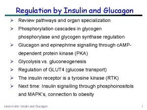 Regulation by Insulin and Glucagon Review pathways and