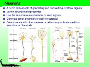 Neurons A nerve cell capable of generating and