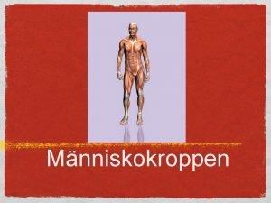 Mnniskokroppen Anatomi uppskrning Skelettet Stommen i kroppen Frutsttning