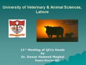 University of Veterinary Animal Sciences Lahore 11 th