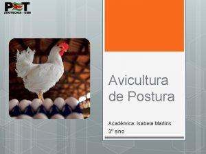 Avicultura de Postura Acadmica Isabela Martins 3 ano