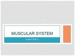 MUSCULAR SYSTEM CHAPTER 6 MUSCLE CELL TYPES Skeletal
