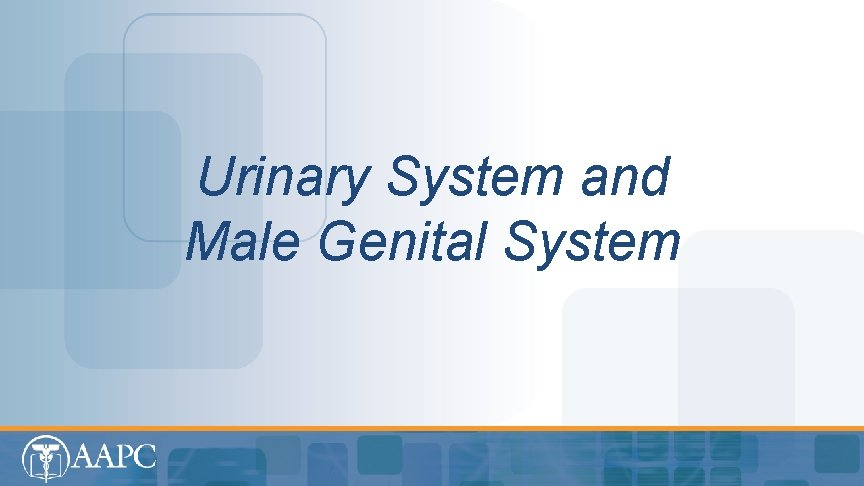 Urinary System and Male Genital System CPT copyright