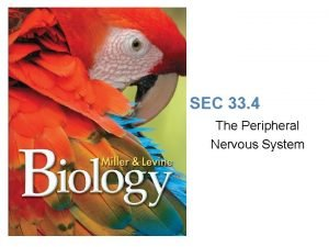 Lesson Overview The Peripheral Nervous System SEC 33