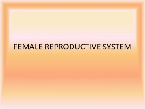 FEMALE REPRODUCTIVE SYSTEM Anatomy Physiology Cont The female