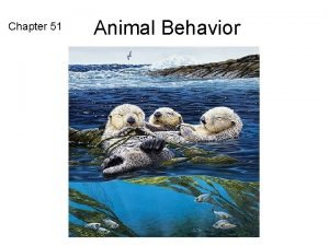 Chapter 51 Animal Behavior What is Behavior Behavior