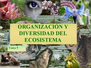 ORGANIZACIN Y DIVERSIDAD DEL ECOSISTEMA Tema 5 organizacin
