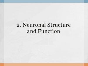 2 Neuronal Structure and Function Neuron Apica Dendrites