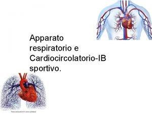 Apparato respiratorio e CardiocircolatorioIB sportivo Apparato circolatorio Lapparato