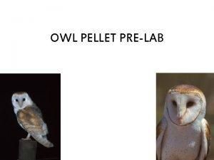 OWL PELLET PRELAB OWL PELLETS Owl pellets are