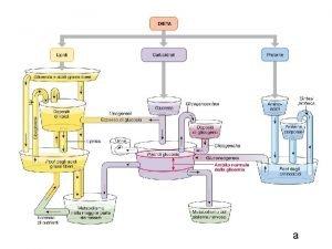 a non c insulina e glucagone iperglicemia secrezione