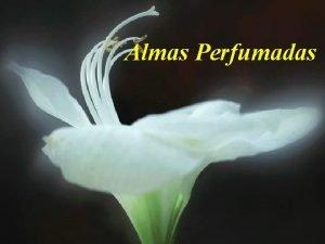 Almas Perfumadas Tem gente que tem cheiro de