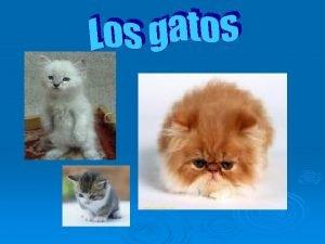 Alimentacin del gato Una alimentacin rica en protenas