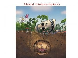 Mineral Nutrition chapter 4 Mineral Nutrition How plants