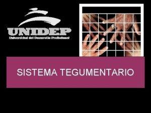 SISTEMA TEGUMENTARIO El sistema tegumentario est formado por