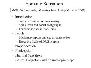 Somatic Sensation MCB 160 Lecture by Muming Poo