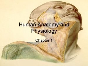 Human Anatomy and Physiology Chapter 1 I Overview