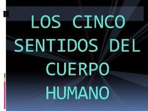 LOS CINCO SENTIDOS DEL CUERPO HUMANO Para qu
