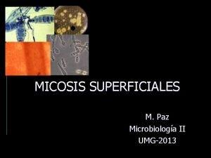 MICOSIS SUPERFICIALES M Paz Microbiologa II UMG2013 Micosis