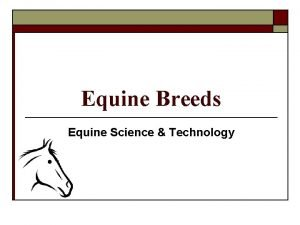 Equine Breeds Equine Science Technology Equine Breeds Feral