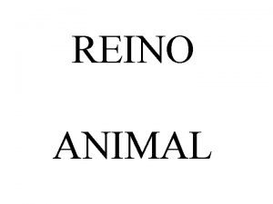 REINO ANIMAL INVERTEBRADOS Principales grupos de invertebrados Porferos