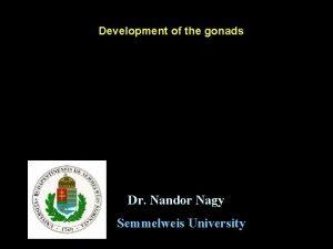 Development of the gonads Dr Nandor Nagy Semmelweis