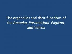 The organelles and their functions of the Amoeba